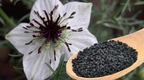 chimenul-negru-minunea-naturii
